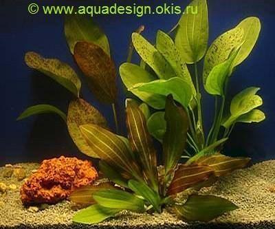 Аквариумные растения растения для