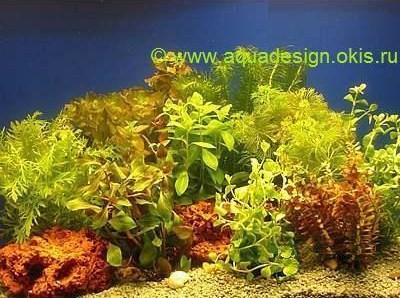 Растения для аквариума в связках