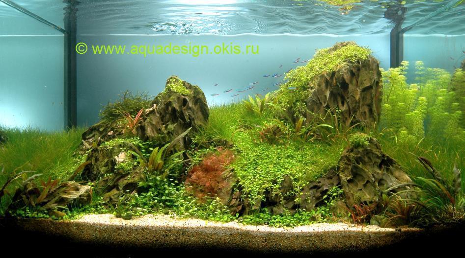 Растения в аквариум растения для